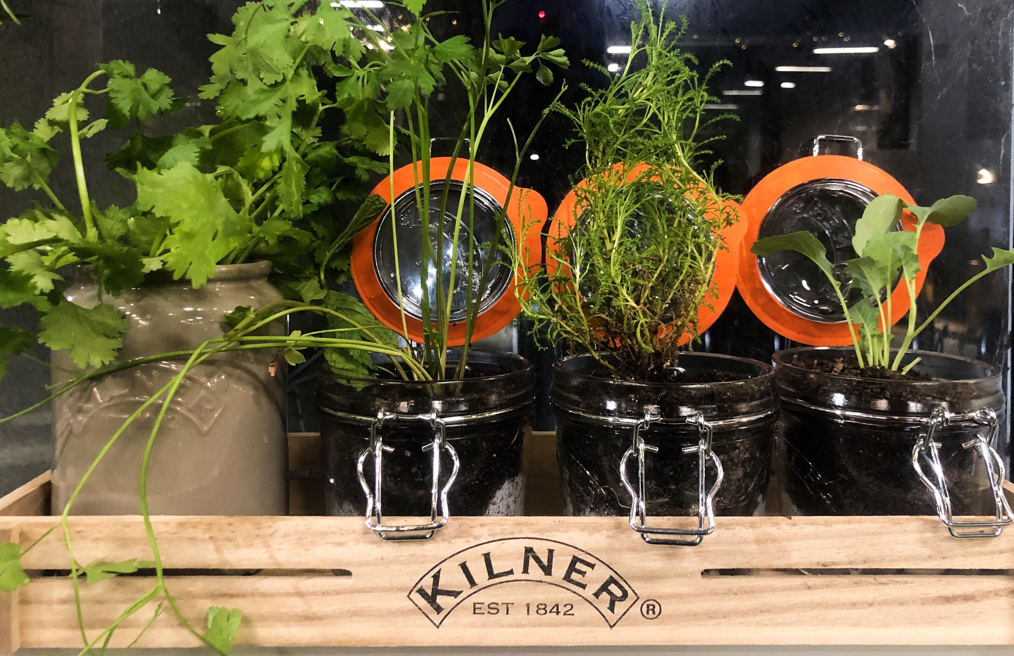 Kilner® Jars being used in the veggie garden